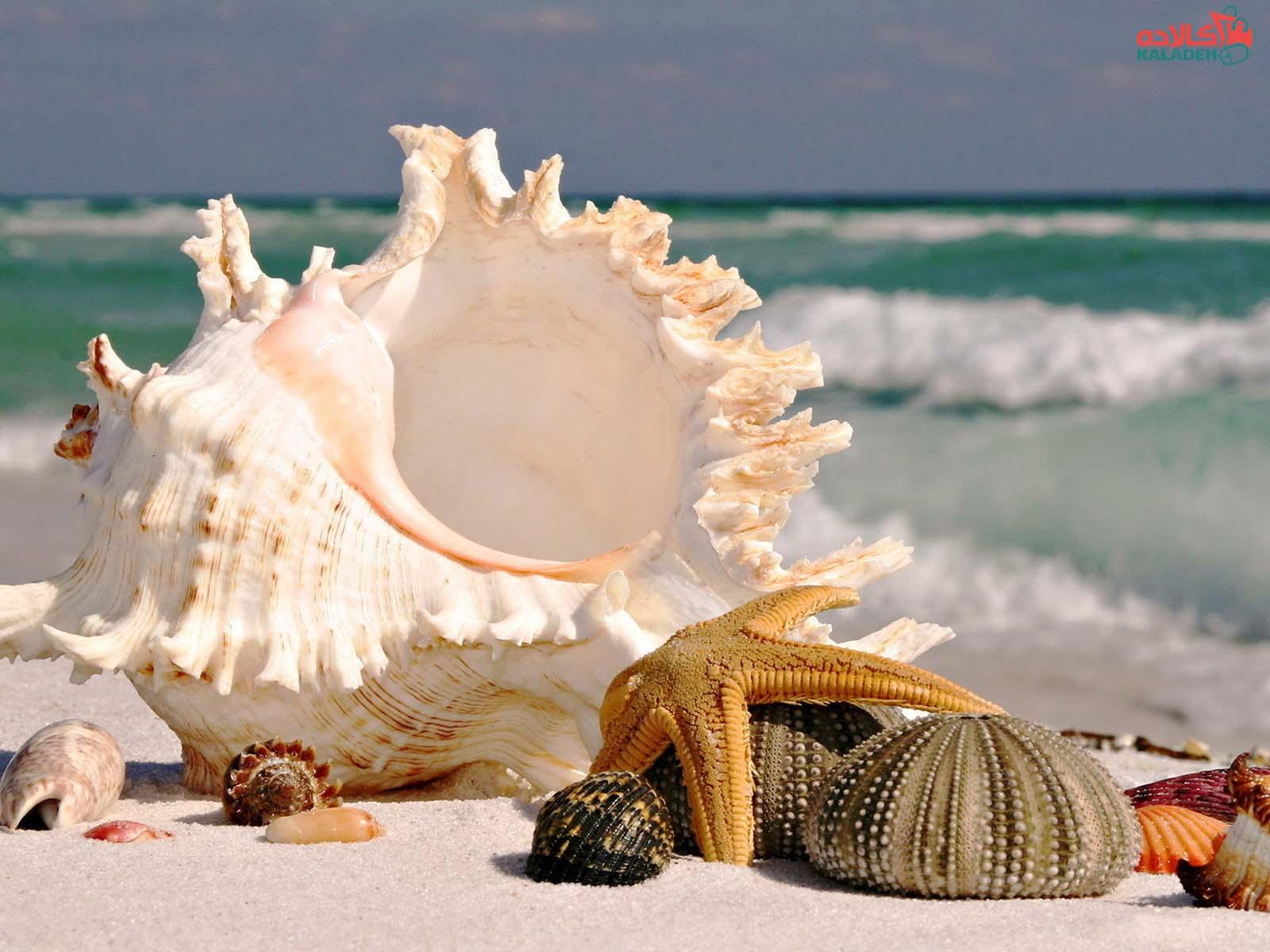 کلاژن دریایی چیست؟